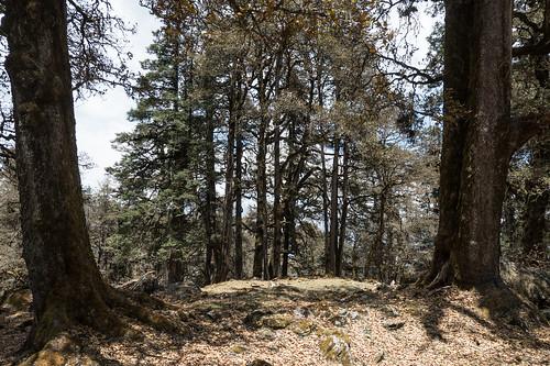 Kauri Pass-38.jpg