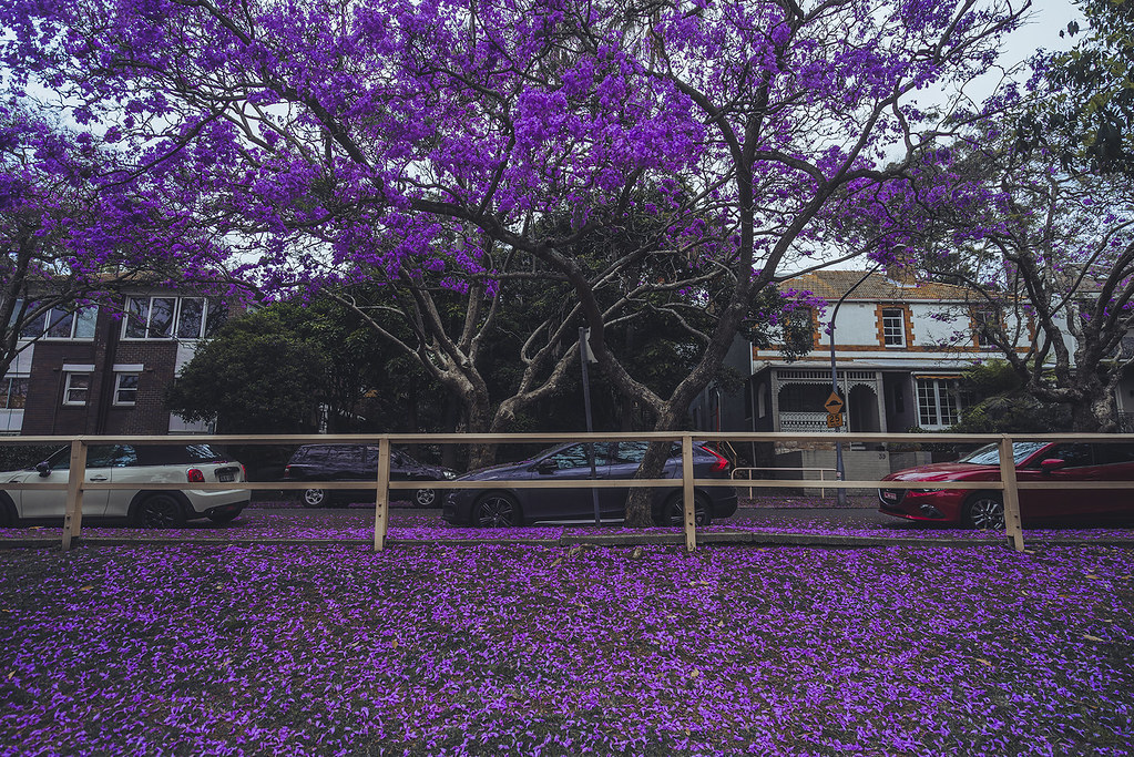 McDougall St, Kirribilli, Sydney, Australia