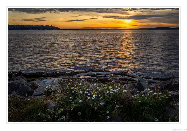 Sunset and Daisys