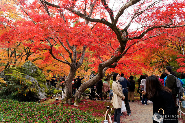 20191126-27-Autumn garden at Hogon-in Temple