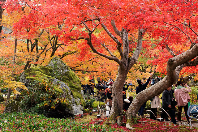 20191126-28-Autumn garden at Hogon-in Temple