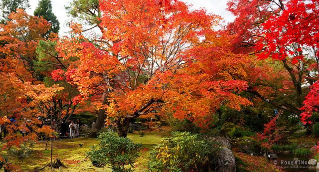 20191126-25-Autumn garden at Hogon-in Temple