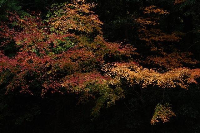 Autumn leaves / Saimyoji Temple