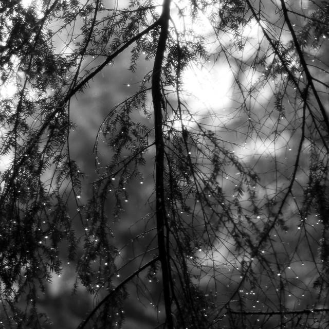 Up Through Trees 071