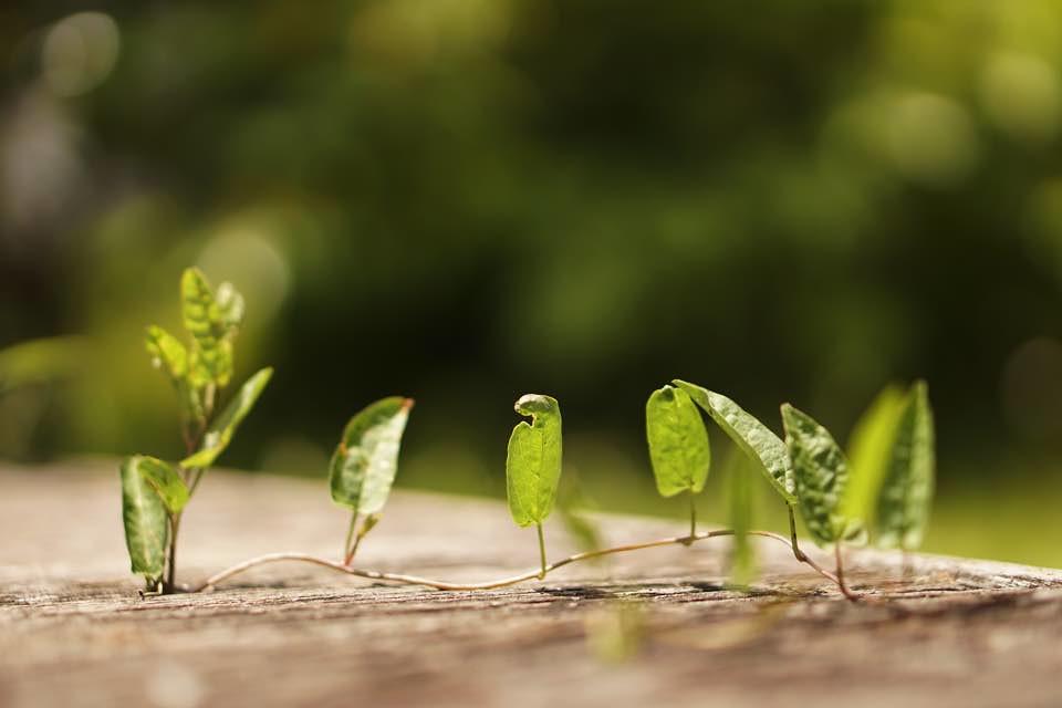 地面スレスレの草
