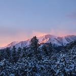 Winter Morning Flagging