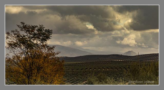 Jaén tierra de olivos // Jaén land of olive trees
