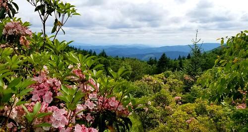 ilvsp2019 flowers graysonhighlandsstatepark explore nature getoutside views mountains
