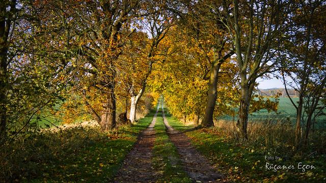 Herbst Allee auf Rügen