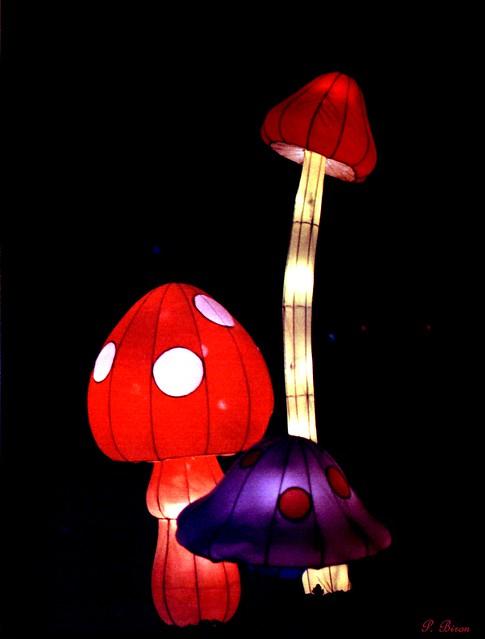 Illuminations sauvages - Zoo de Thoiry
