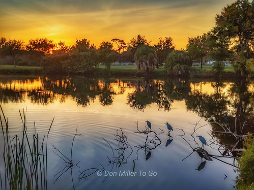 pixel3xl reflections sunset lakes birds rookery onawalk