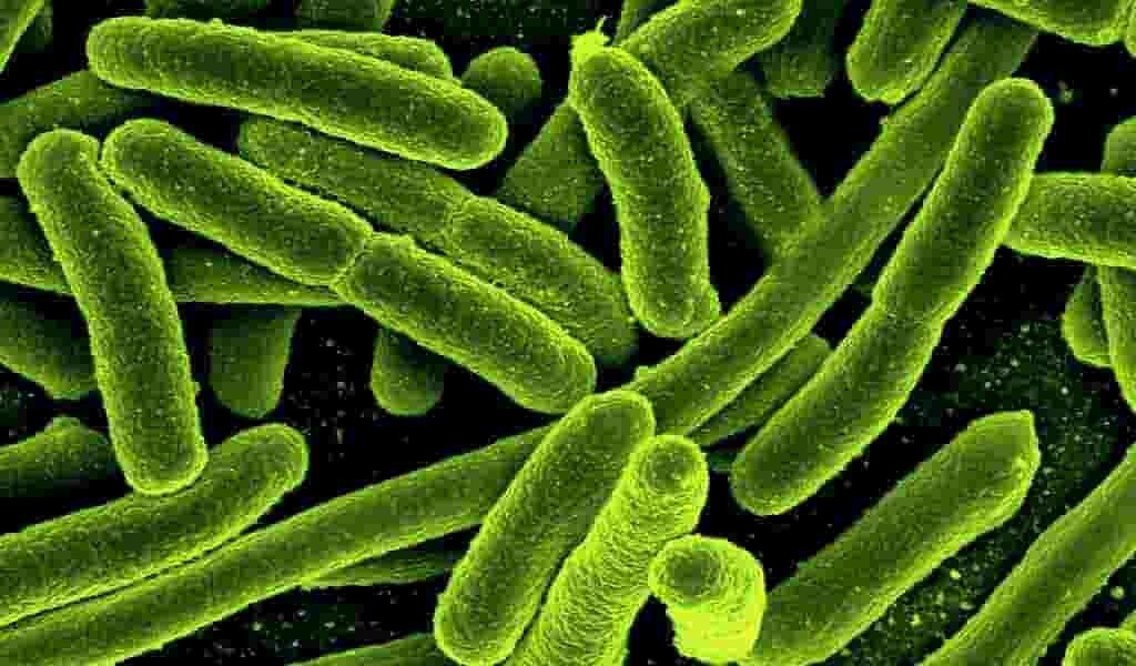 des-bactéries-friandes-en-CO2-contre-le-changement-climatique