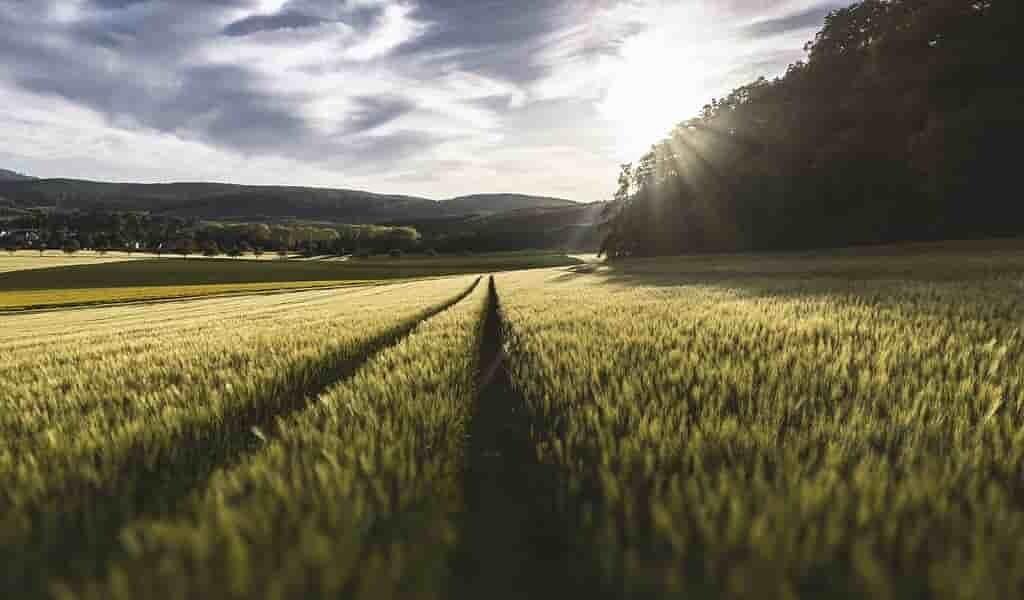 Le changement climatique affectera la production agricole