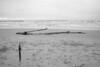 velenux posted a photo:Tronco portato a riva da una mareggiata