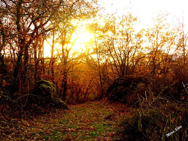 Águas Frias (Chaves) - ... o sol outonal rasgando a sua luz através da árvores quase despidas ...