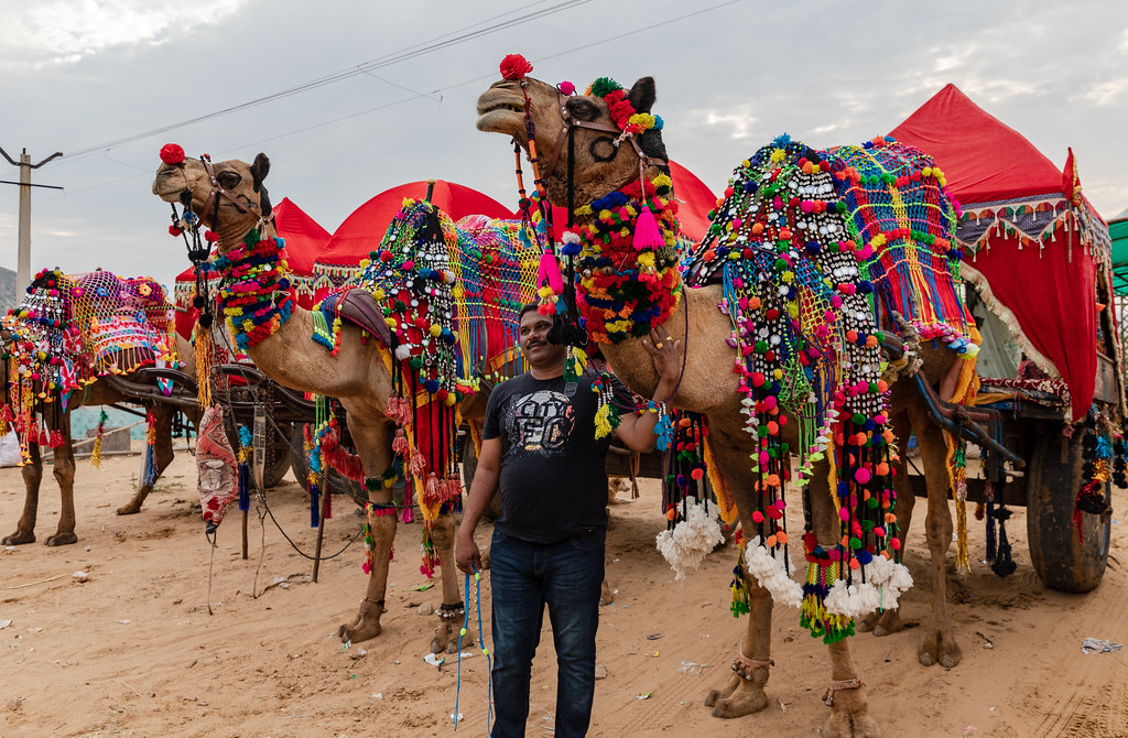 Decorated Camels in the Pushkar Camel Fair