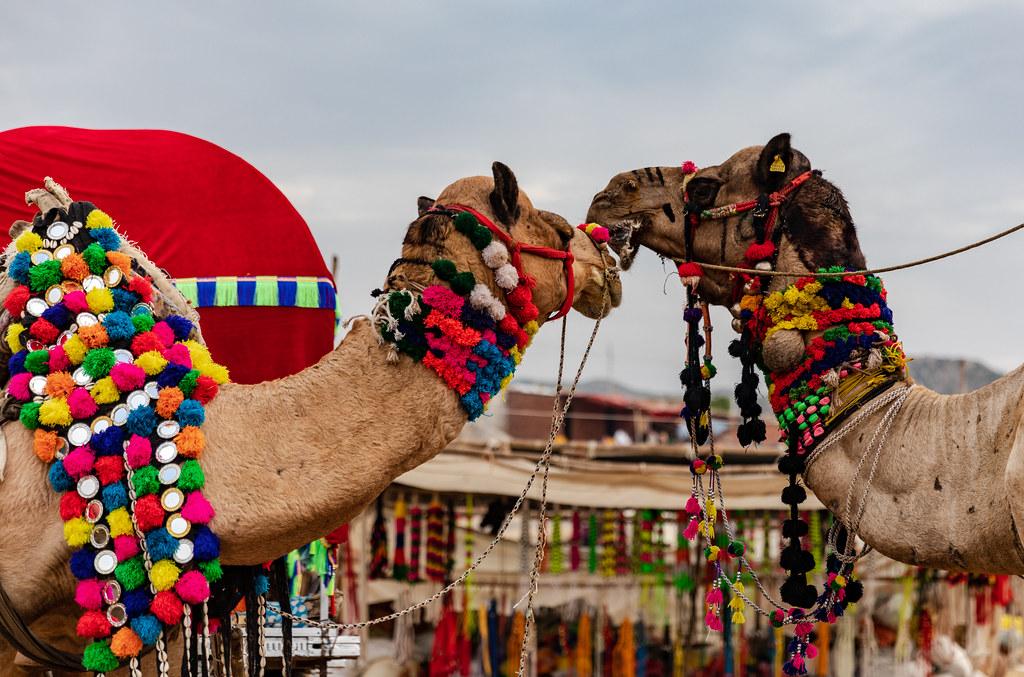 Pushkar Festiva, Rajasthan