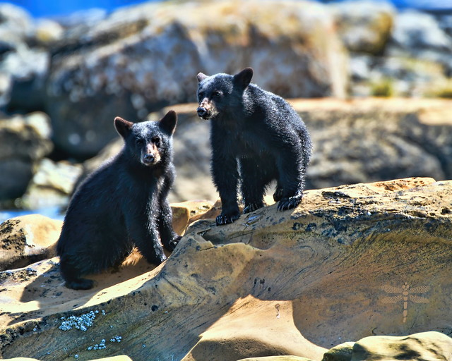 beach bear babies . . .