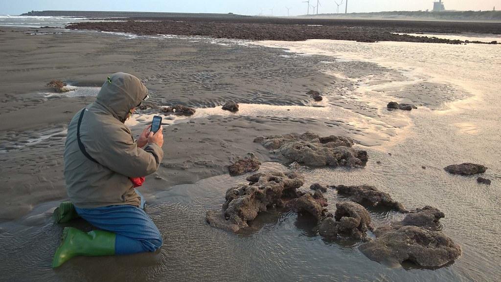大潭藻礁研究與保育