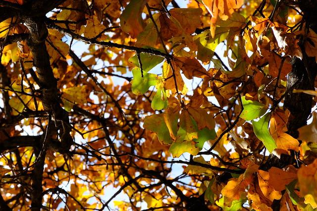 Arlington Autumn 11 11.24.19
