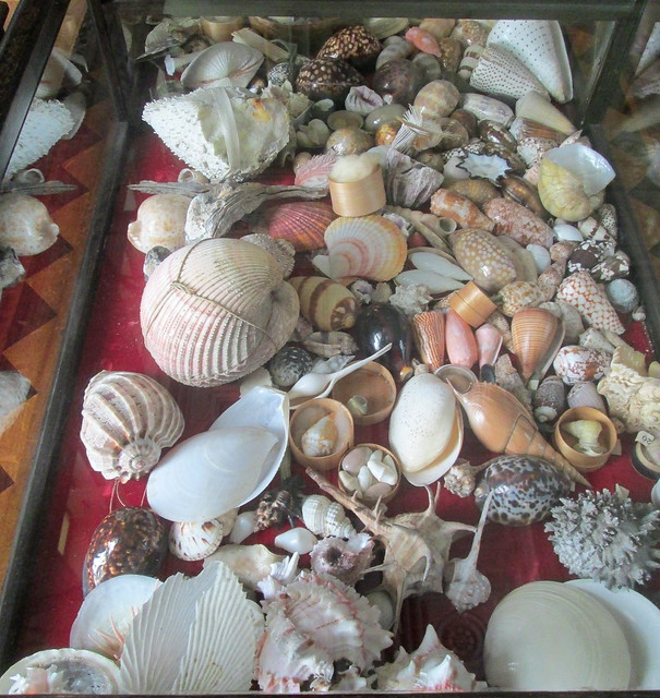 shells, Calke Abbey