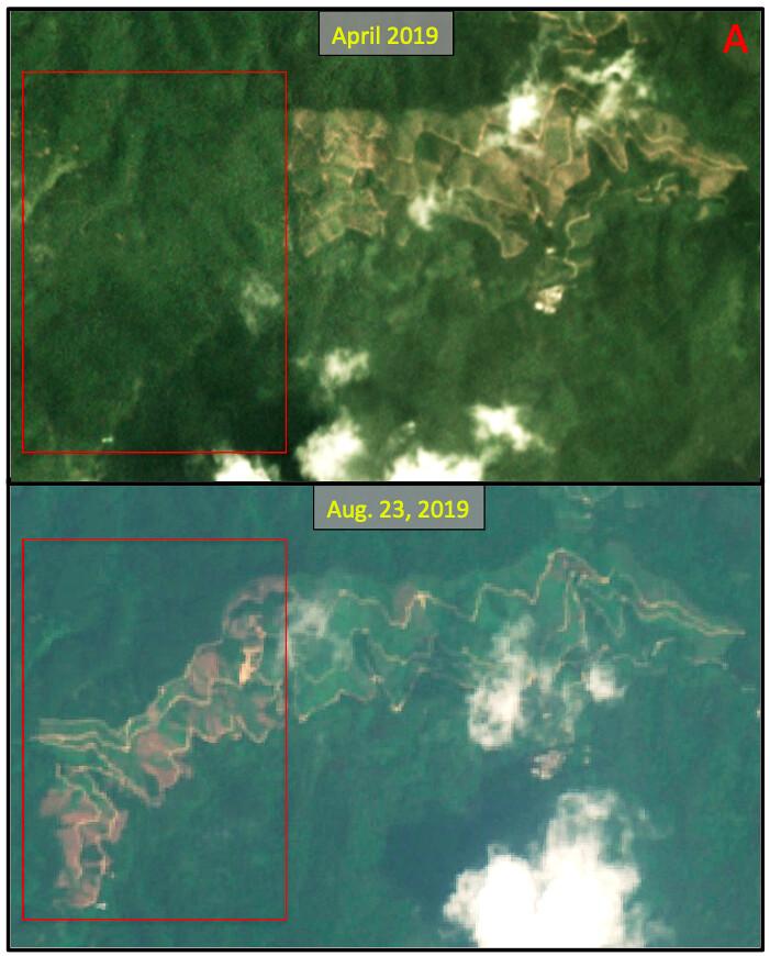 放大其中一個區域可以發現,四月還有森林覆蓋的區域到八月已經被砍伐掉了。- 透視中國