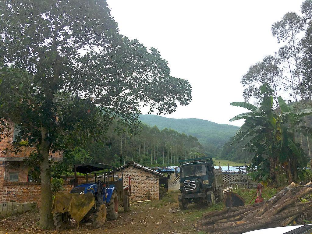 桉樹人工林環繞著碧流村。- 透視中國