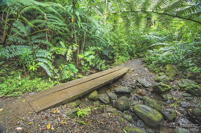 Manoa Valley on the Manoa Falls Trail - Honolulu, Oahu, Hawaii