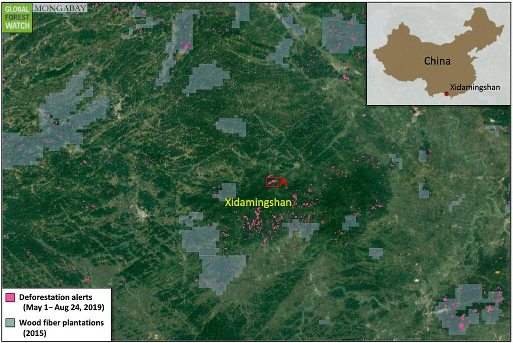 衛星數據顯示,在過去的幾個月里西大明山森林保護區已損失了大片森林。這些警報標識表示人工林(大多數人工林是2015年以後才建立的)或森林砍伐。- 透視中國