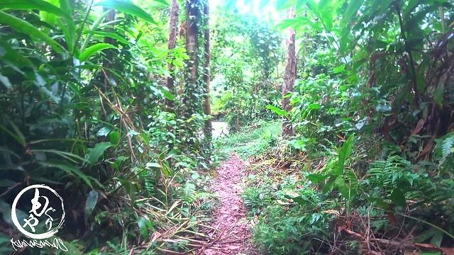 ジャングルを抜けます