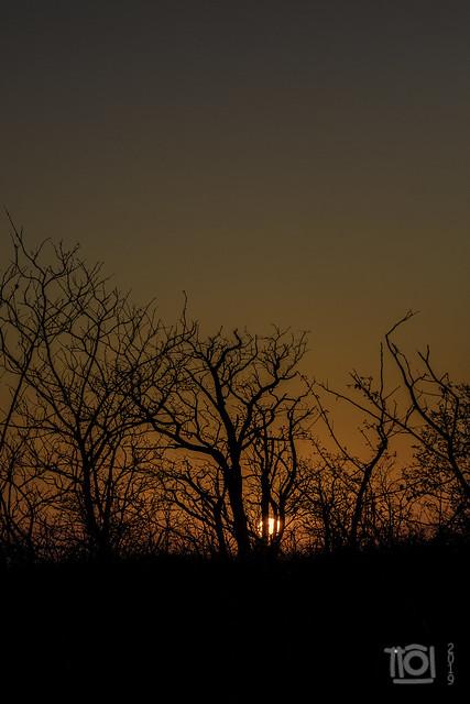 Rising sun at Mopani