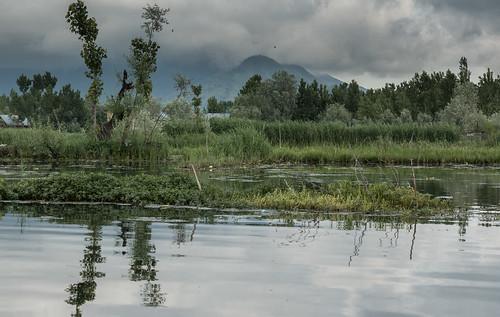 Kauri Pass-6.jpg