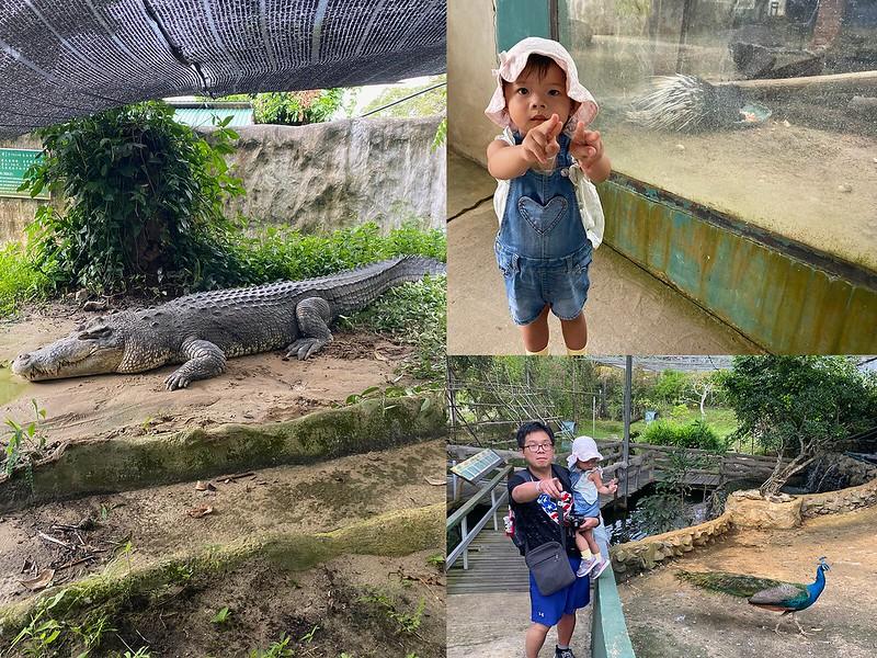 jong_crocodile_002