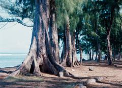 Trees and Sea.