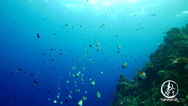 魚たちが種類によって層になっています