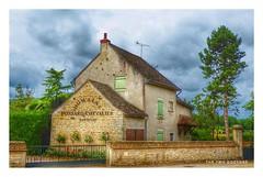 Santenay vigneron, Bourgogne, France