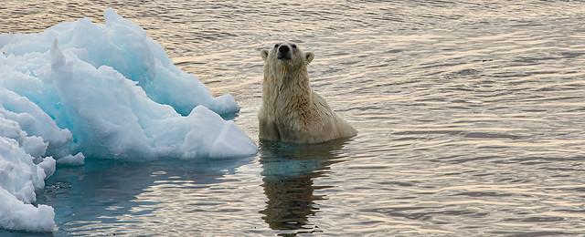... verso l'80° parallelo nord (17) ... l'orso ci assedia...