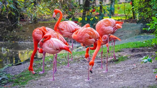 #Flamingo - 7773
