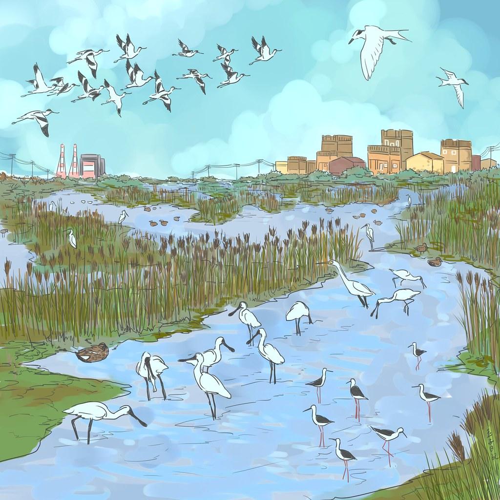 茄萣濕地與候鳥