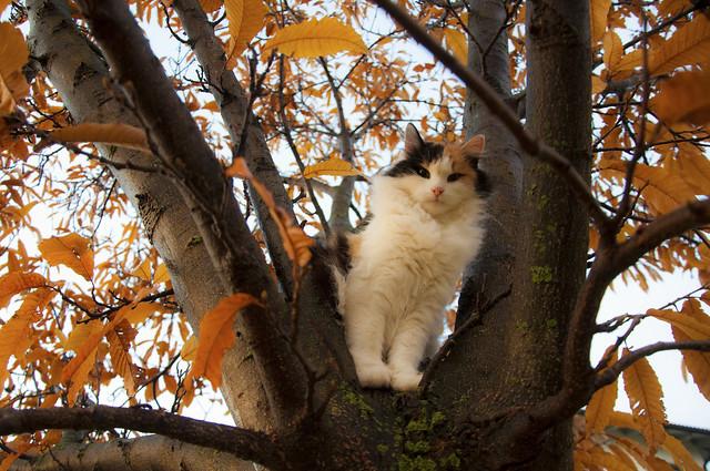 Rosa am Kastanienbaum