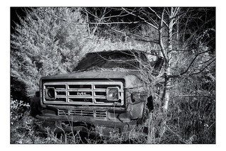Out to Pasture - Infrared