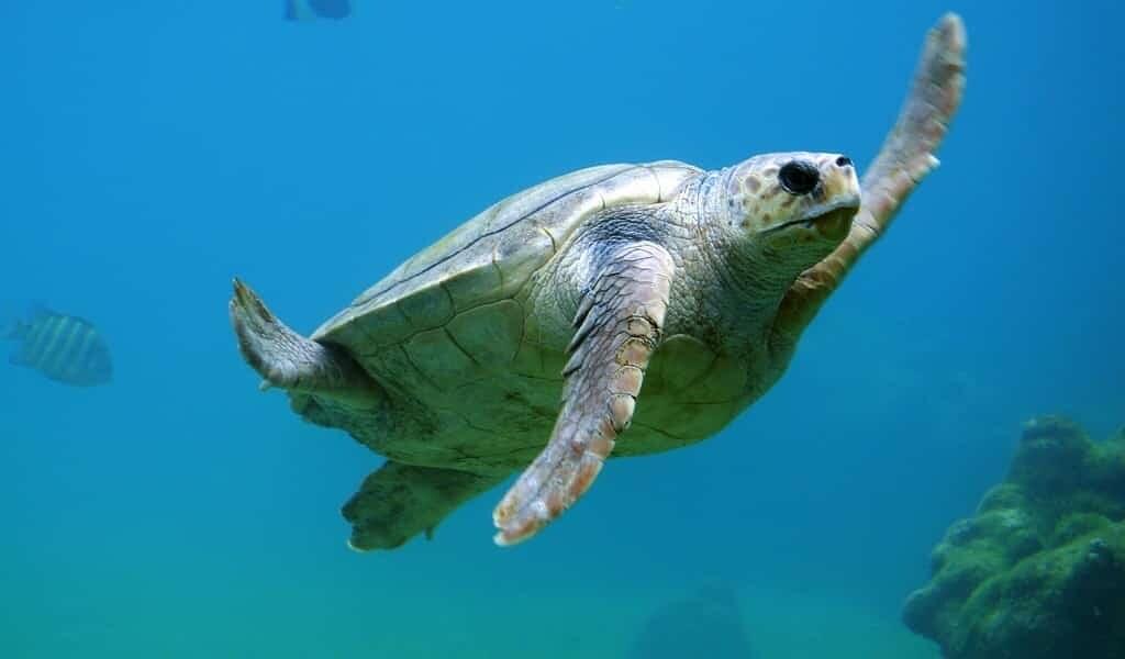 Les animaux pourraient aider à surveiller les océans