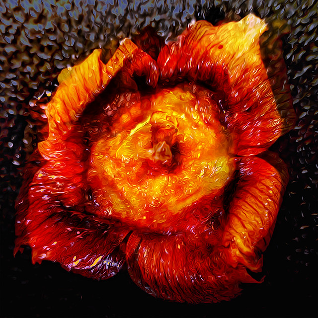 Bildschichten KakiBluete 02 Fire-Blooming