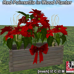 Red Poinsettia in Wood Planter PIC