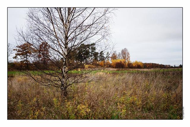 Landscape / Autumn