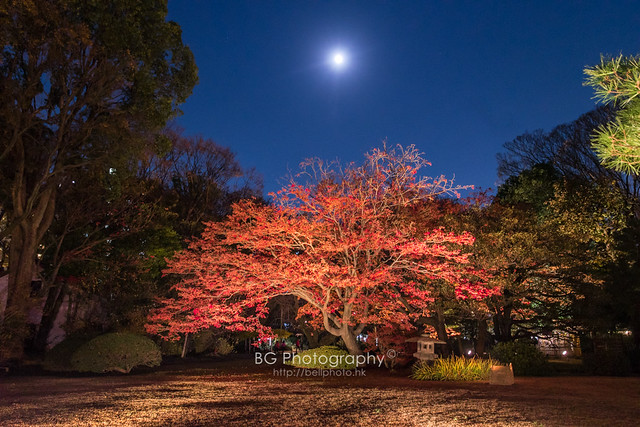東京。秋.
