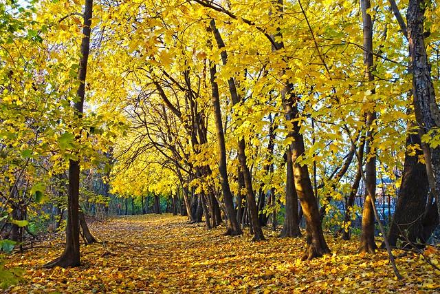 Autumn's Golden Glow