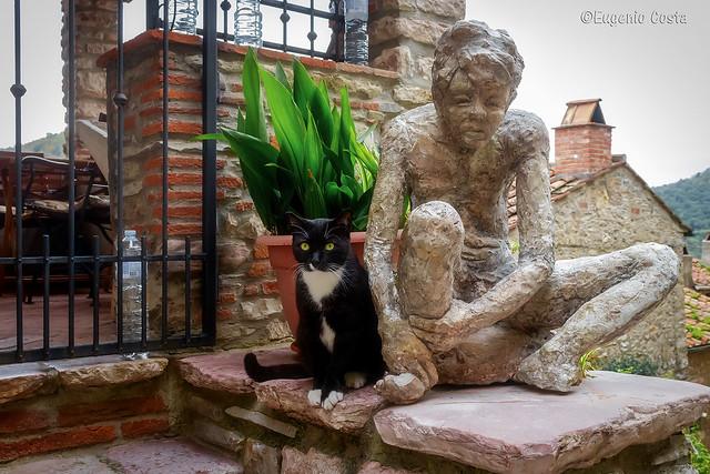 I gatti conquisteranno il mondo.- Cats will conquer the world.