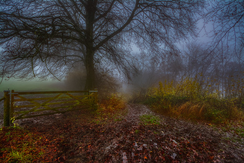 woodland woods coopershill trees gate mist gloucestershire d7100 cotswolds