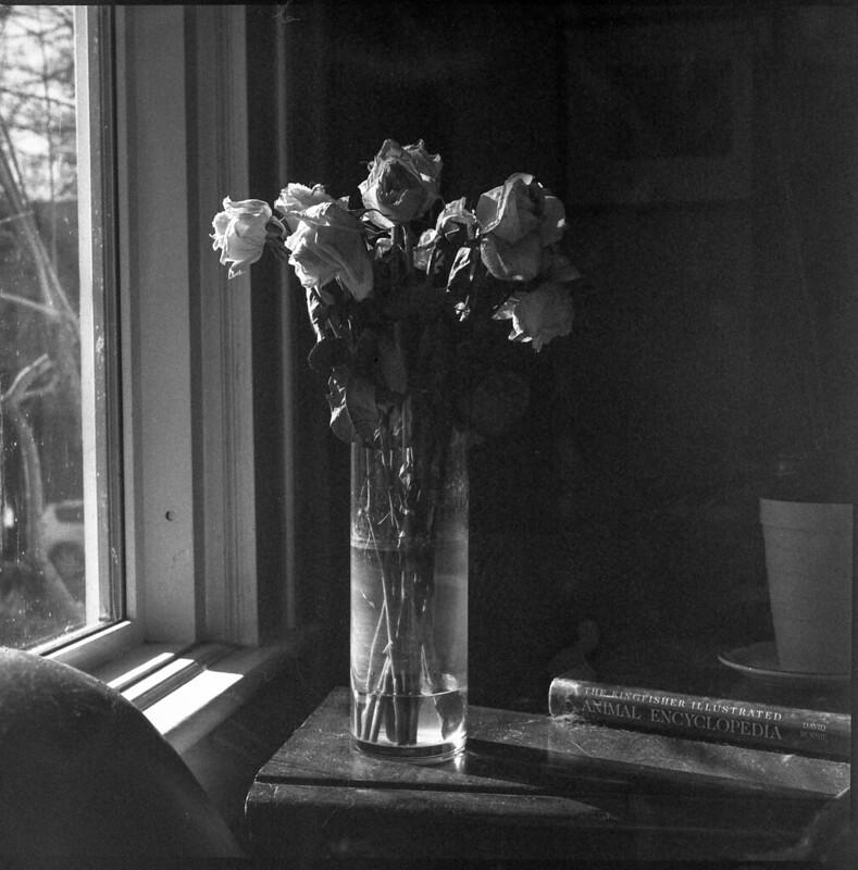 roses, wilting, vase, picture window, interior II, Asheville, NC, Ricohflex Dia M, Kodak Tri-X 400, HC-110 developer, 11.16.19